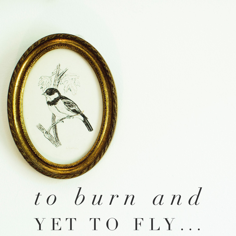 To Burn And Yet To Fly {a Bite Size Blog}